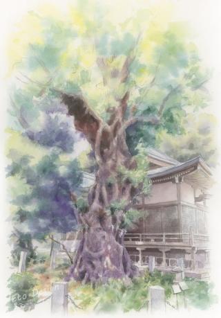2018年9月16日 「木(熊野神社)」
