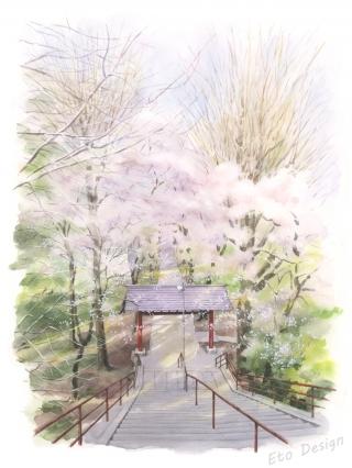 2018年5月6日 「桜 菅原神社2」