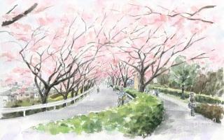 2016年4月12日 「桜 尾根緑道」