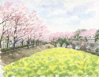 2016年4月15日 「桜と菜の花 尾根緑道 」
