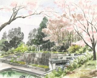 2016年4月11日 「桜 忠生公園」